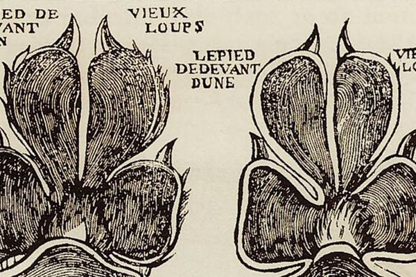 Des empreintes de loups référencées dans un registre normand.