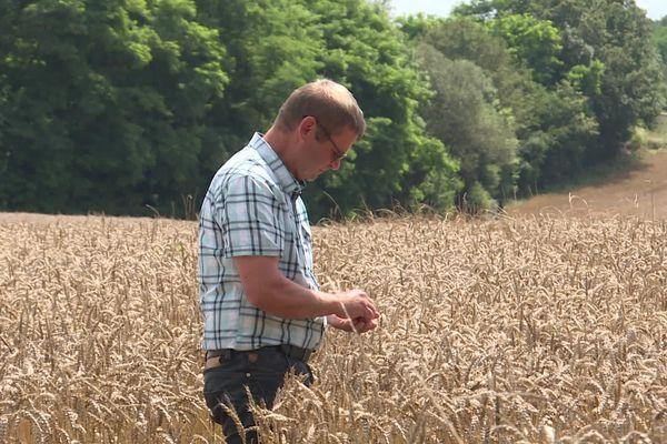 Les blés sont arrivés à maturité dans le Jura. Les agriculteurs scrutent la météo des prochains jours espérant pouvoir mettre en route leur moissoneuses batteuses.