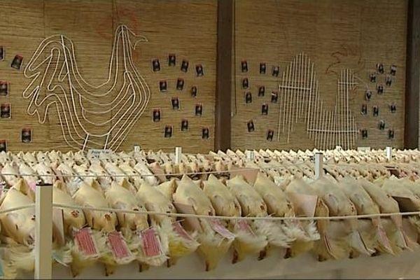Plus de 2.000 volailles fines de Bresse étaient présentées à cette glorieuse de Louhans