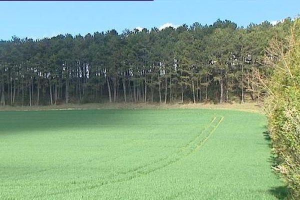 La Motte-Giron : un champ de blé qui devrait bientôt être replanté en vignes