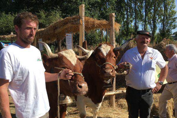 La vache Ferrandaise vient du Puy de Dôme, elle est appréciée pour le lait de ses fromages ( Fourme d'Ambert...), on compte aujourd'hui plus de 3 000 femelles.