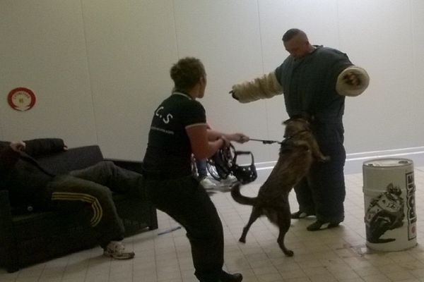 Ce week-end, la neuvième édition du challenge national inter-unités canin se déroule à Blois. Les participants sont des agents de sécurité, des militaires ou des policiers et bien évidemment nos amis les chiens. Cette année, il y a un nouvel atelier : la recherche de matières stupéfiantes.