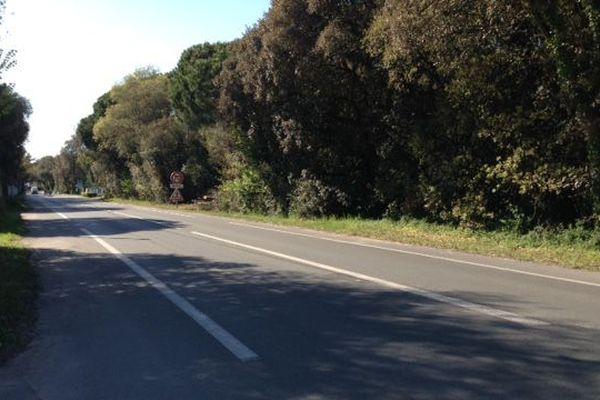 La route départementale où s'est déroulé l'accident
