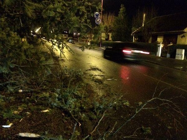 Evrecy (Calvados) arbre couché sur le trottoir