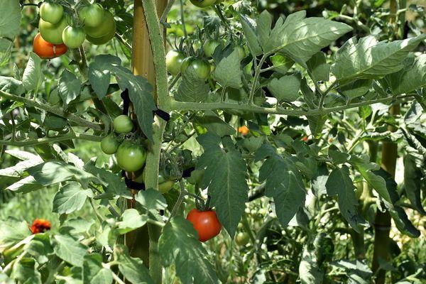 Albi vise l'autosuffisance alimentaire d'ici 2020. Un projet irréaliste pour certains.