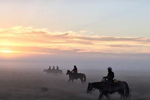 Comme au far-west, le cavaliers de l'AVET regroupe les troupeaux dans