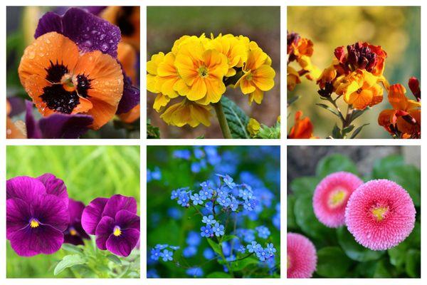 Plantez dès septembre des fleurs pour 10 mois de floraisons non-stop