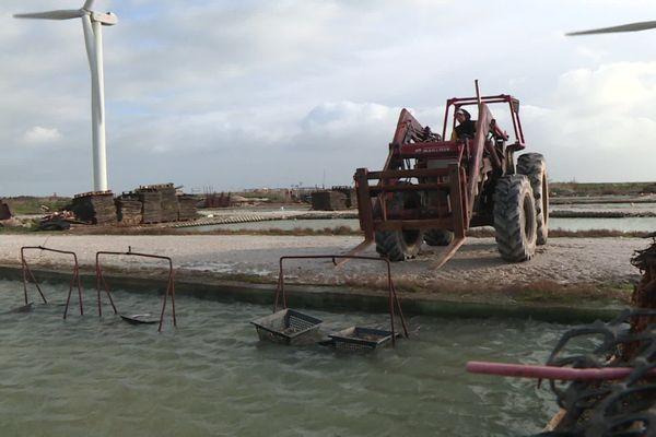 La concession de Patrice Le Cain au polder des Champs : des bassins, un tracteur, une cabane, une calibreuse...