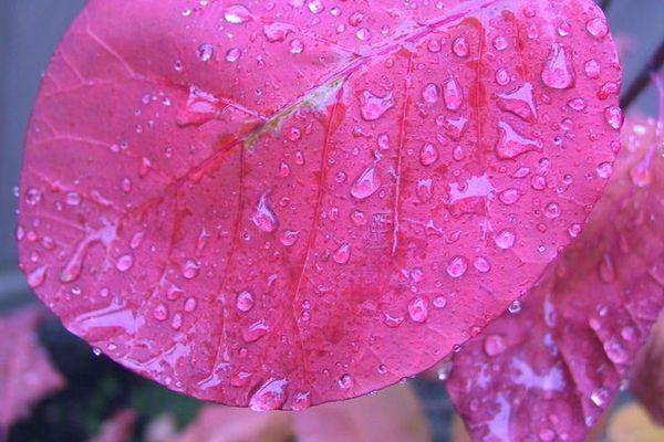 La vie en rose malgré la pluie