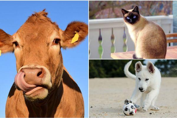 """Le bien-être animal, un des sujets abordé dans l'émission 100% Web """"T'en penses quoi ?"""""""