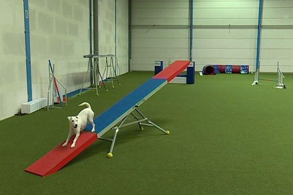 Une séance d'une heure dans cette salle de sport pour chien coûte une cinquantaine d'euros.