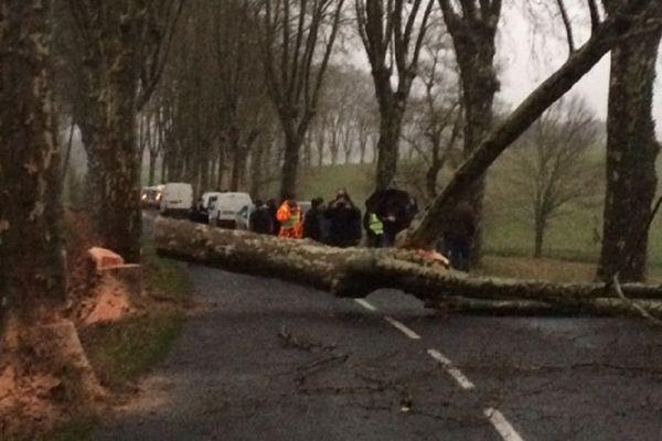 Les arbres ont été abattus sur la D92 entre Réalmont et Lautrec dans le Tarn