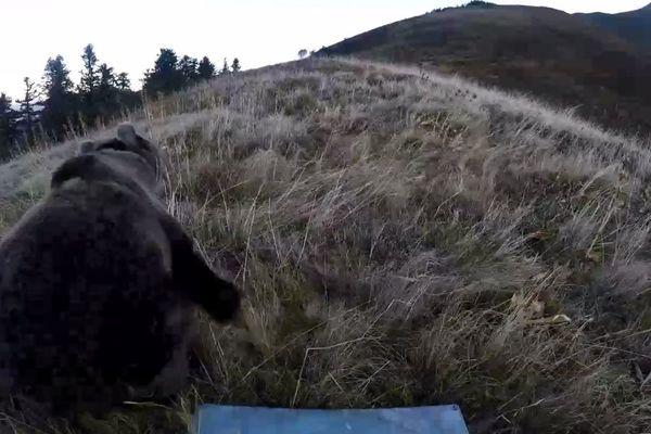 La réintroduction de deux ourses en octobre 2018 dans les Pyrénées était bien légale, a décidé le tribunal administratif de Paris.