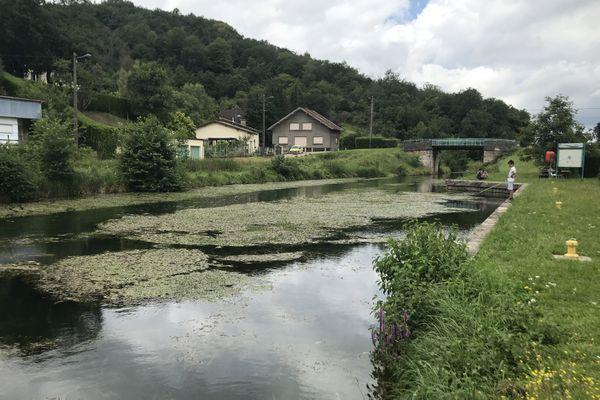 Le myriophylle hétérophylle constitue une sorte de tapis végétal flottant à la surface de l'eau. Ici le 28 juillet 2021 dans le bief numéro 28 du canal de la Marne au Rhin sur la commune de Tronville-en-Barrois.