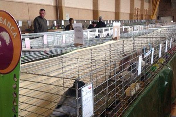 Des lapins, des pigeons, des tourterelles, plus de 1000 animaux sont présentés ce weekend à Brioude.