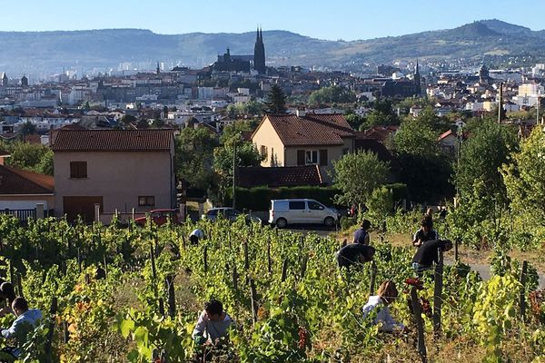 Vendanges sur les coteaux de Clermont-Ferrand.