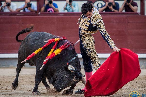 Un toro exigeant, une naturelle au cordeau. Thomas Dufau, madroid, 23 septembre 2018.