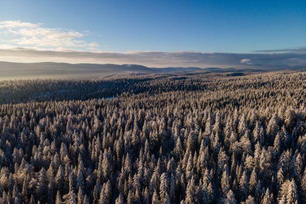 Dans le Haut-Jura, la forêt du Risoux a mis son blanc manteau d'hiver.