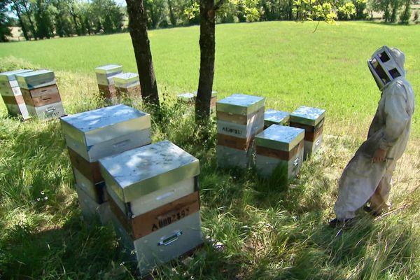 Benjamin Legrand devant les ruches qui lui reste.
