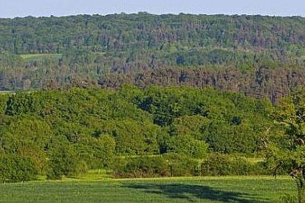Les forêts recouvrent plus de la moitié du territoire et constituent un vaste ensemble boisé, simplement entrecoupé, en son centre, par des vallées et quelques clairières où se concentrent les villages et les activités agricoles.