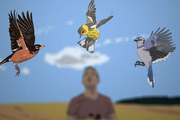 """""""Cocheurs"""", à la quête de l'oiseau rare"""