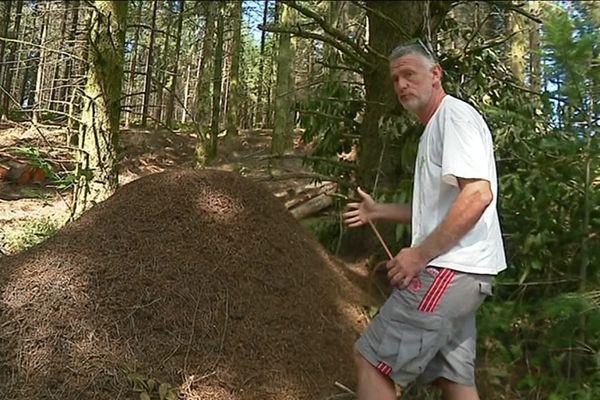 Une fourmilière XXL dans une forêt de Corrèze