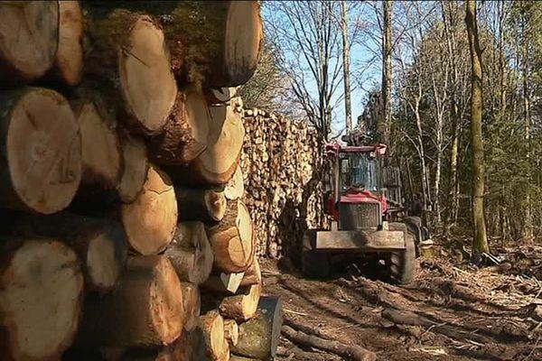 L'ancien agriculteur travaille désormais dans la sylviculture, l'exploitation des arbres forestiers.
