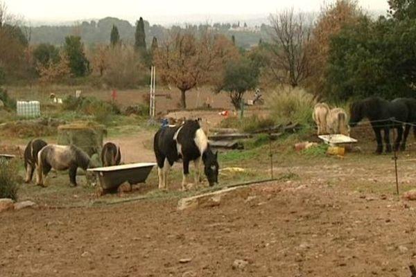 Certains centres équestres comme celui de Villeveyrac, dans l'Hérault, jettent l'éponge, écrasés par les taxes