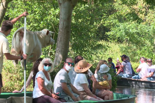 Avec le soleil, les touristes reviennent dans le marais poitevin