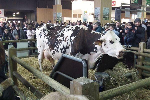 Aronde, vedette du salon de l'agriculture 2013