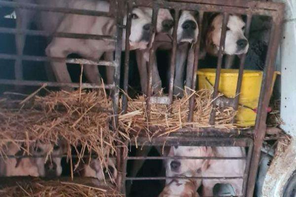 Onze chiens retrouvés enfermés dans deux voitures