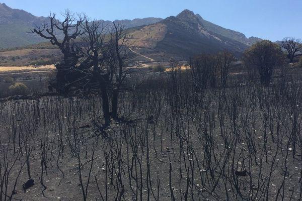 124 hectares sont partis en fumée près du hameau de Suare à Calenzana (Haute-Corse)