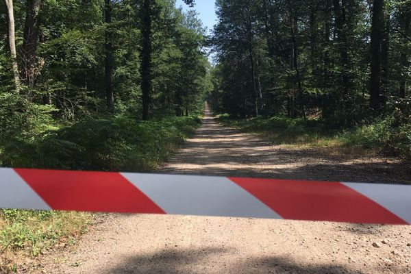 Dans la forêt de Tronçais, dans l'Allier, comme sur l'ensemble du département, le risque d'incendie est élevé en raison de la sécheresse et de la canicule. Depuis mardi 23 juillet, la circulation sur les routes forestières est interdite.
