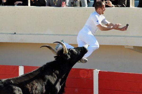Course camarguaise avec raseteur en action : la tradition de la bouvine et de ces courses dans les nombreuses arènes du Sud-Est de la France est importante pour les manadiers.