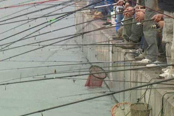 A Sète, chaque mois d'octobre, des centaines de pêcheurs profitent de la migration des daurades