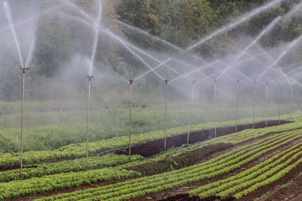 En raison de l'alerte sécheresse, seuls les prélèvements d'eau indispensables sont autorisés sur plusieurs secteurs de la Sarthe.
