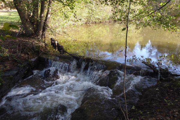 Remettre les cours d'eau dans leur lit d'origine favorise le retour de la biodiversité