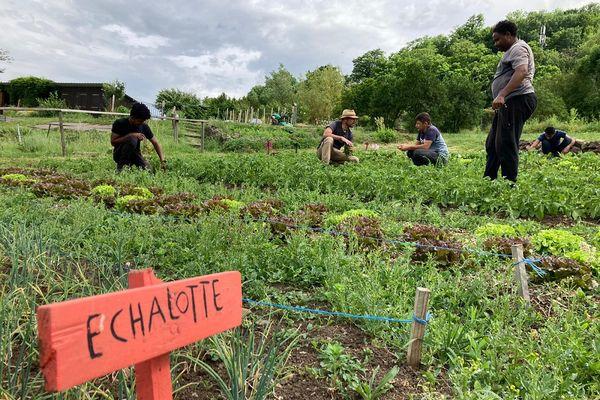 A Aurillac, le jardin de l'association Cantalienne d'Aide à la remise au Travail permet d'accompagner des personnes depuis longtemps sans emploi vers la réinsertion.
