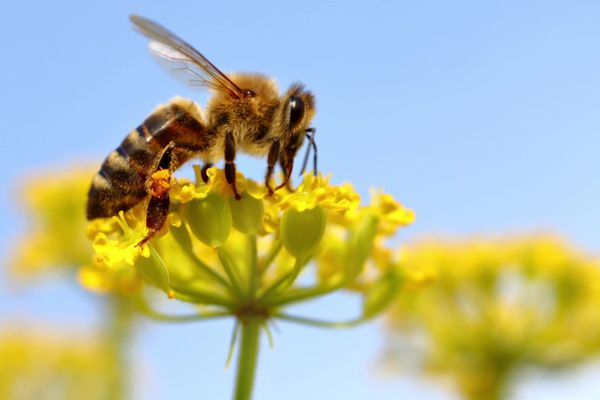 """""""Des abeilles pour demain"""", un documentaire de Bruno Sevaistre diffusé le 1er février 2021 à 23h sur France 3 Provence-Alpes-Côte d'Azur"""
