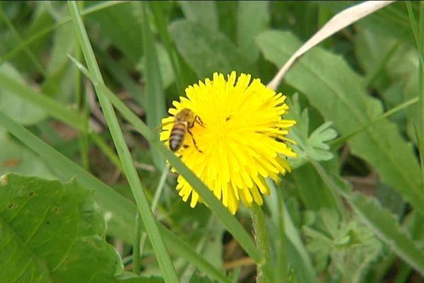 Les vols de ruches sont de plus en plus courants.