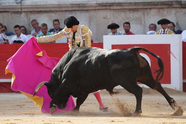 Nîmes ou Bayonne sont des villes où la corrida est une tradition locale ininterrompue