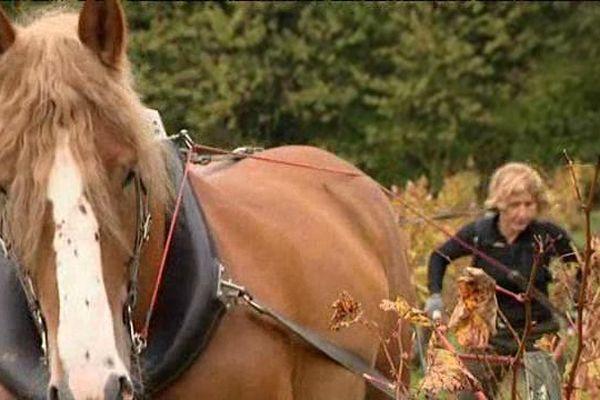 Geneviève avec Appolon son cheval Ardennais.