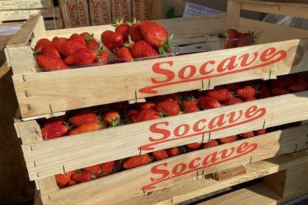 Des barquettes de fraises, prêtent à être expédiées dans les commerces.
