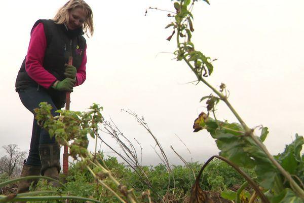 Sophie D'Hoine, maraîchère en permaculture à Cintheaux (14)