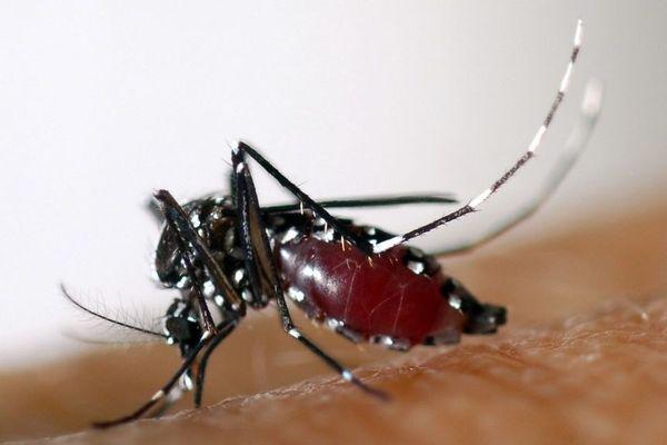 33e cas de dengue dans la région.