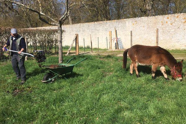 La mule et les brebis offrent aussi un engrais naturel très utile aux jardiniers