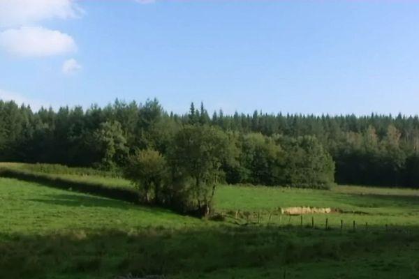 La forêt du Rousset, près de Joncy en Saône-et-Loire est le site retenu pour l'implantation d'un Center Parc