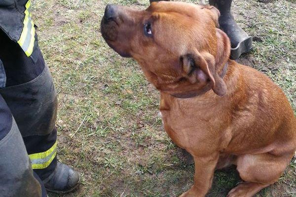 Le chien, tombé dans un puits ce dimanche, à Moutiers-au-Perche