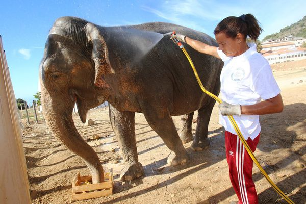 Népal, une des deux éléphantes recueillies par la princesse Stéphanie en 2013, est décédée.