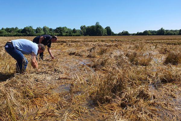 Sur cette parcelle d'orge de printemps, les agriculteurs ne peuvent que constater les dégâts laissés par la crue de la rivière Blaise, qui coule à Landricourt dans la Marne.